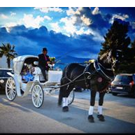 Άμαξες Μαγγίνας-wedding carriages athens