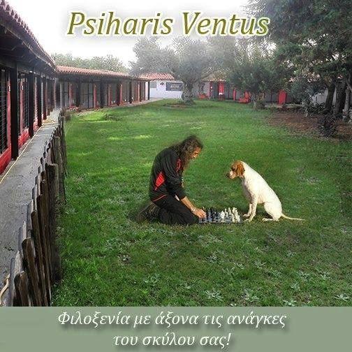 PSIHARIS VENTUS - Εκτροφείο POINTER