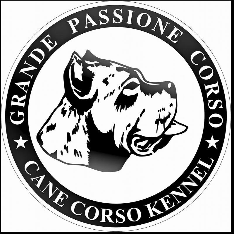 CANE CORSO KENNEL - Grande Passione Corso